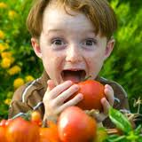 boy eating tomatoes