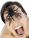 Spider fears phobia counseling therapy therapist counselor central florida orlando